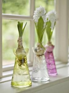 hyacinth vases